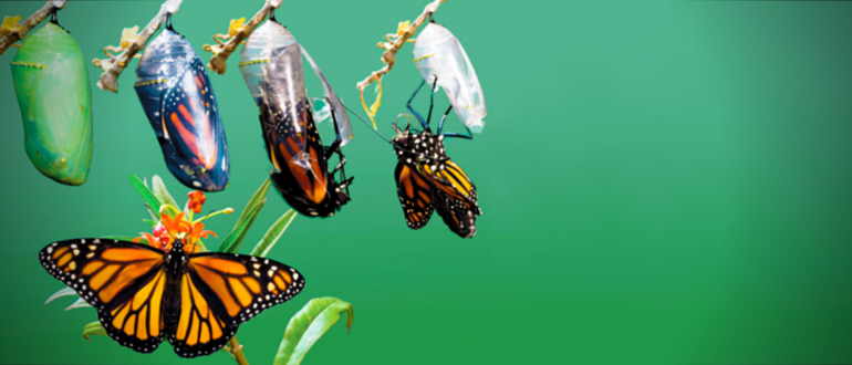 A DevOps Metamorphosis Echoes Through Reverb.com
