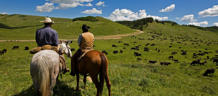 Cowboys, Cattle, and Dog