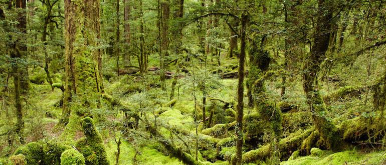 swampUp JFrog forest